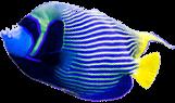 Banner Fish 02