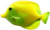 Coral Reef Fish 2