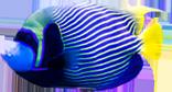Coral Reef Fish 1