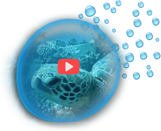 Maui Dive Site Scuba Videos