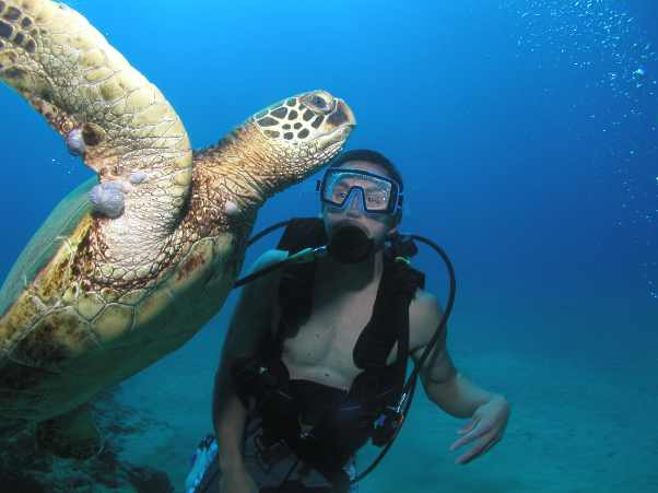 Beginner Scuba Diving Maui Turtle