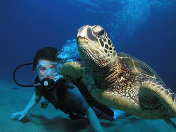 Turtle Dive Maui