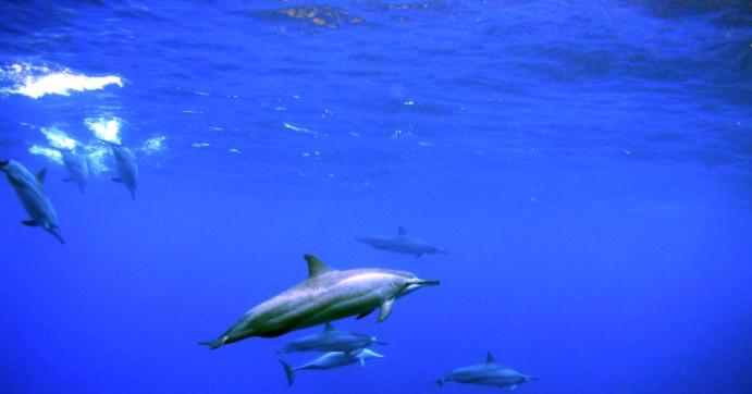Best Scuba Maui - In 2 scuba diving maui