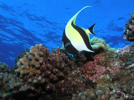 Family Scuba Dive Maui