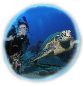 Beginner Scuba Diving Maui Turtle Dive