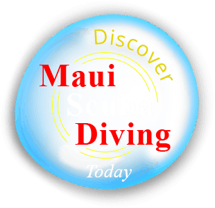 Intro Scuba Diving Class Beginners in Maui Photo