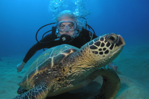 Dive With Turtles in Maui