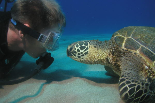 Maui Turtle Dive